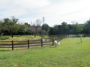 大泉さくら運動公園